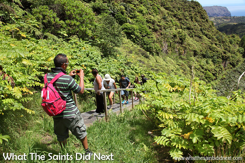 The Peaks National Park on St Helena is a cloud forest habitat where plants gain moisture directly from settling clouds and fog condensation. Diana's Peak is the highest point on St Helena at 823 metres.