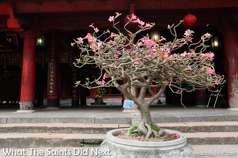 Flowering bonsai tree in the 'Sage Sanctuary' courtyard.