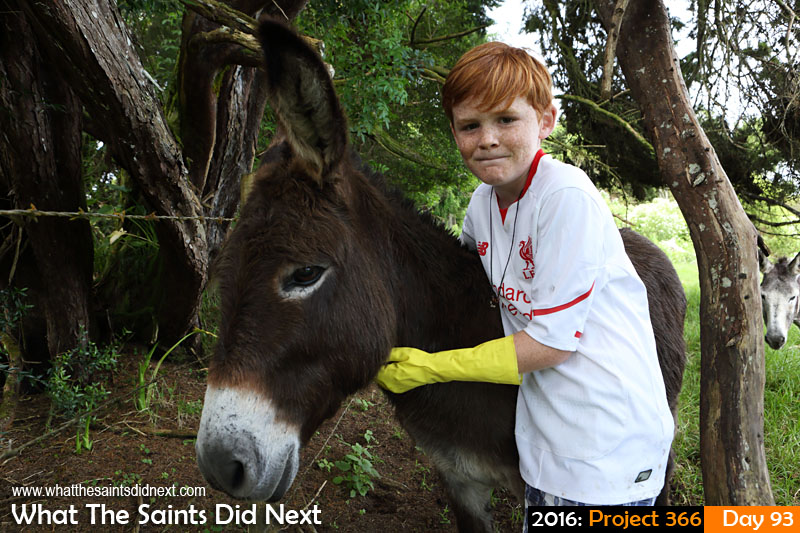 'Malawi'<br /> 2 April, 2016, 09:45 - 1/125, f/8, ISO-400<br /> Weekly check-up for the island's donkeys.