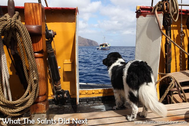 'Sirius' the dog is one of the crew on board Bark Europa. Adorable as he is, unfortunately quarantine laws prevented him from being allowed ashore at St Helena so a view from the deck was sadly as close as he could get.