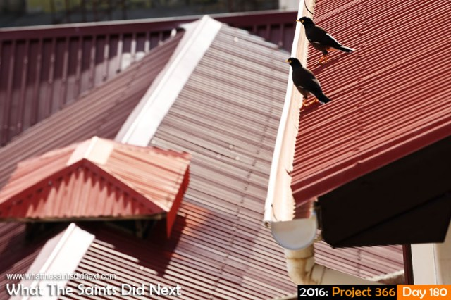 'Atatürk' 28 June 2016, 09:16 - 1/400, f/8, ISO-200 What The Saints Did Next - 2016 Project 366 Mynah bird conference on the roof tops of Jamestown.