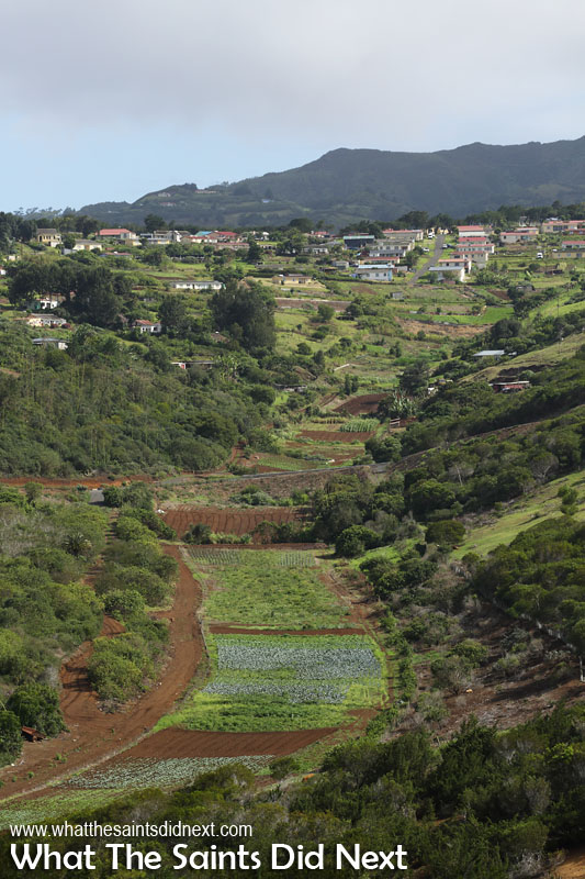 A great view of some of the farming areas in Mulberry Gut with the main Longwood district at the top of the hill. St Helena's central peaks can be seen in the far distance.
