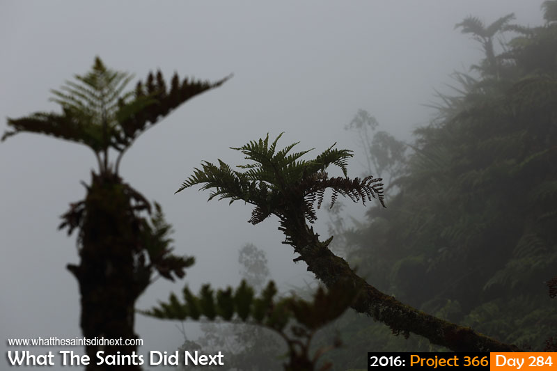 'Type 2' 10 October 2016, 16:40 - 1/400, f8, ISO-200 What The Saints Did Next - 2016 Project 366 Endemic tree ferns in the mist on top of Diana's Peak, St Helena.
