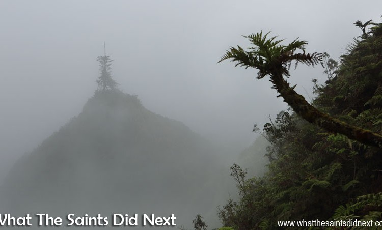 Magic In The Mist: The St Helena Cloud Forest