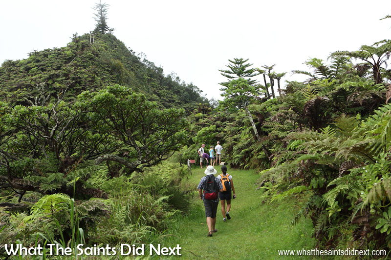 Diana's Peak National Park, St Helena, is a superb hiking experience with clearly marked trails that link the three main peaks. It's a good idea to go with an experienced guide if it's your first time as in a few places near the top there are steep drop-offs through the foliage that can give a false sense of security underfoot.