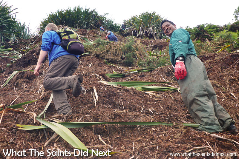Climbing up the hillside during the flax clearing process. This picture is a great example of how steep the slope is. Graeme Leo (right) told us the work is lot more dangerous when it is wet. Diana's Peak National Park, St Helena Island.