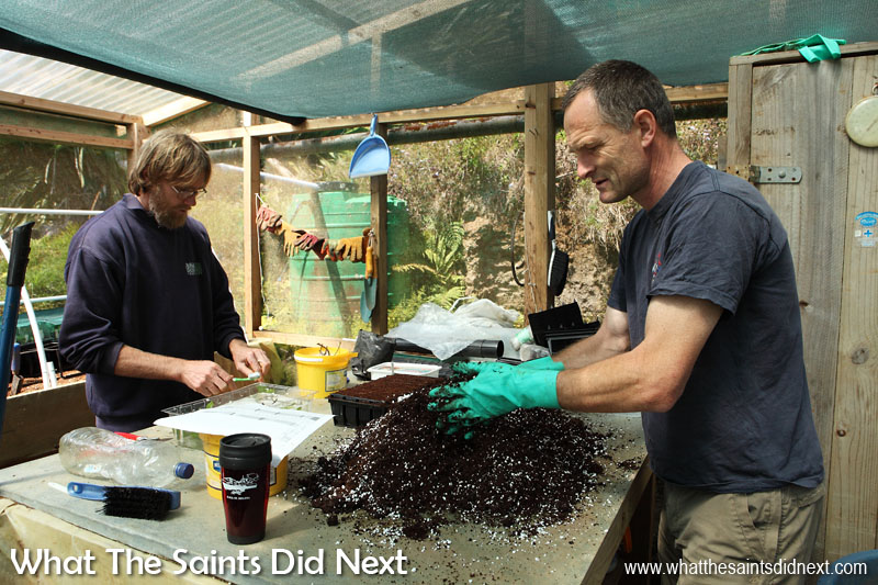 "Lourens Malan (left) is the project manager of a two-year Darwin-Plus funded project ""Securing St Helena's cloud forest trees & associated invertebrates."" Here working on creating new seed orchards with fellow ecologist, Andrew Darlow, in the Diana's Peak National Park nursery."