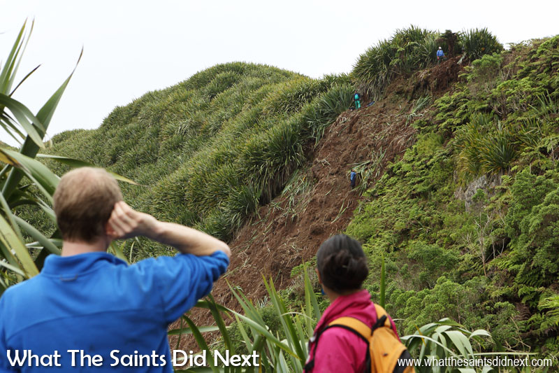 The view of the strip of hillside being cleared of flax from across the valley. Another good angle to show how steep the terrain is. Diana's Peak National Park, St Helena Island.