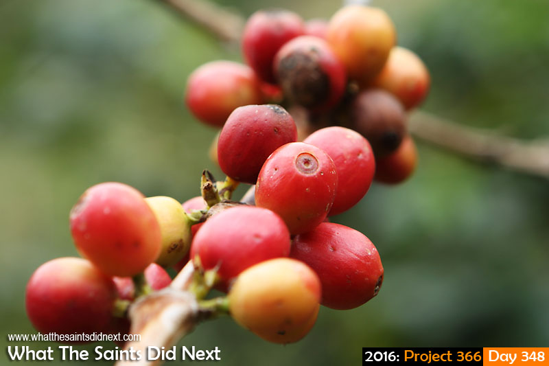 Growing island coffee