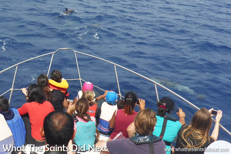 Things To Do With Kids On St Helena - Dolphin watching from the bow of the Enchanted Isle.