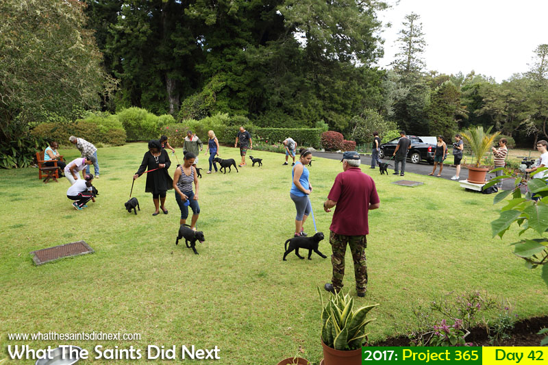 'Pilot trouble' 11 February 2017, 10:38 - 1/125, f8, ISO-200 What The Saints Did Next - 2017 Project 365 Puppy training at Plantation House, St Helena.