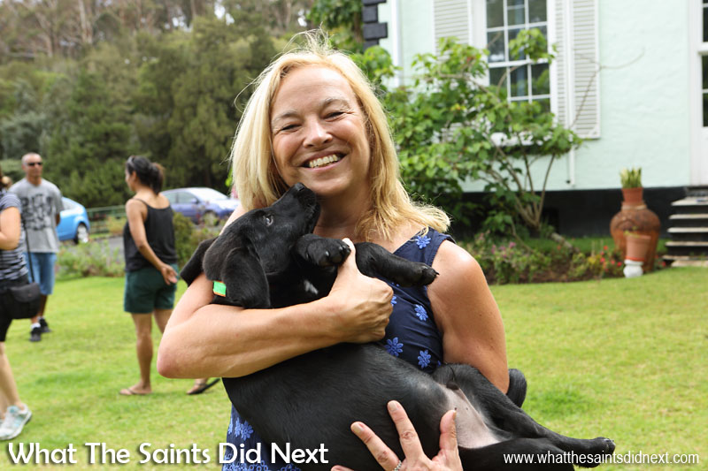 Governor Lisa Phillips, welcoming the puppies back to Plantation House for their first training session with their new owners. New Dogs, Old Tricks - Dusty's Dozen.