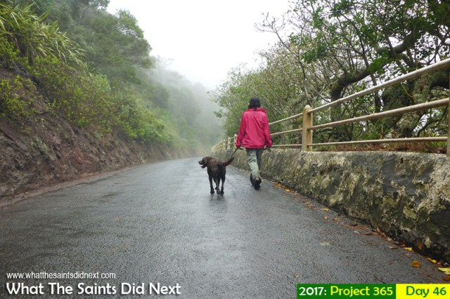 'Use your head' 15 February 2017, 10:07 - 1/500, f3.3, ISO-100 - Panasonic Lumix DMC-FT5 What The Saints Did Next - 2017 Project 365 Walking in the rain on Tomb Road, St Helena.