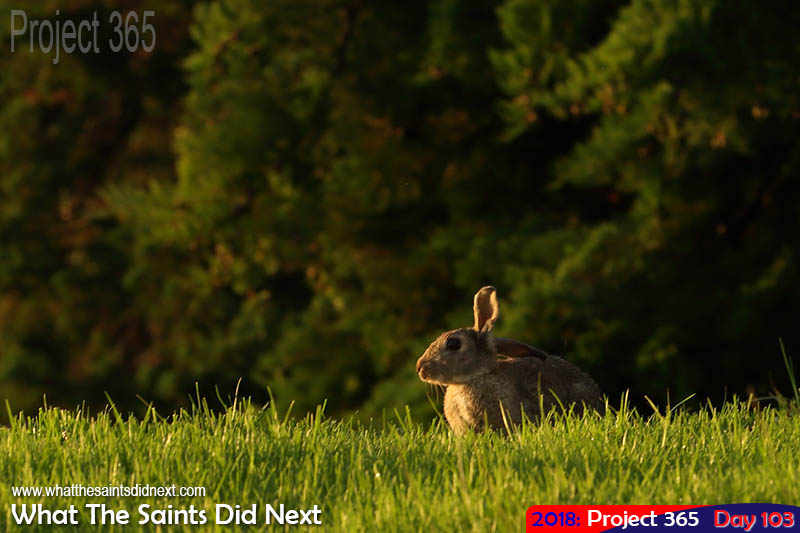 Pesky rabbits.