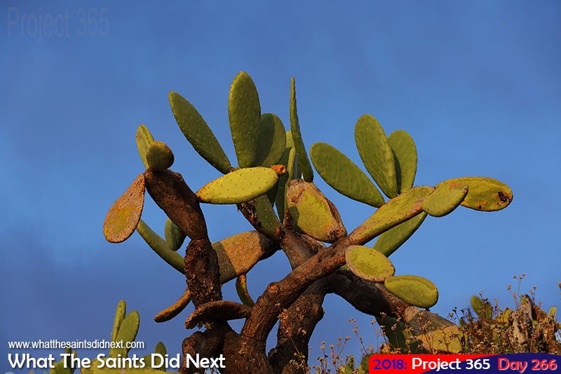 Cactus bush with blue sky background.