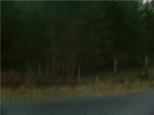 I think I see Bigfoot!