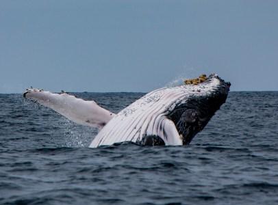 За последний месяц восемь таинственных «китов» переместили 5% всего запаса биткоинов