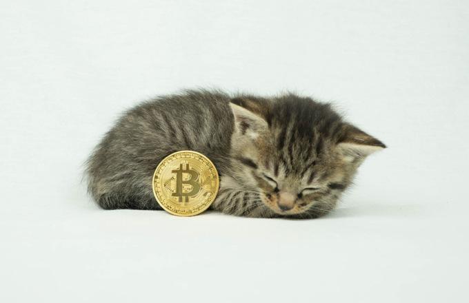 Котята, лук, миниатюрные рабочие и смерть — подборка нелепых стоковых фотографий на тему криптовалют