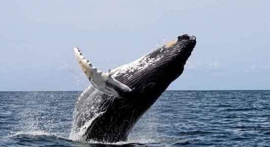 Мог ли «кит» стать причиной падения курса биткоина