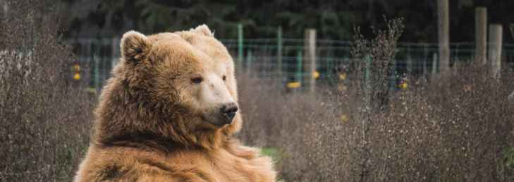 Три фактора, которые указывают на конец медвежьего рынка биткоина