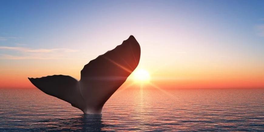 Биткоин-кит совершил ошеломляющую транзакцию в $1,1 млрд всего за $83