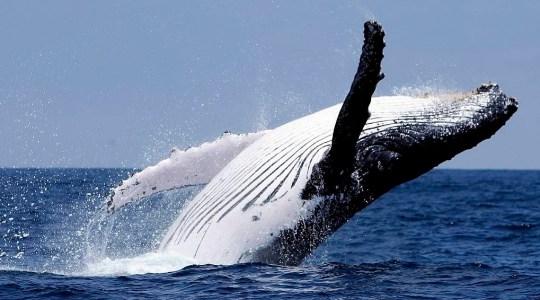 Отчет: Всего за один день «киты» купили более 1 млн ETH