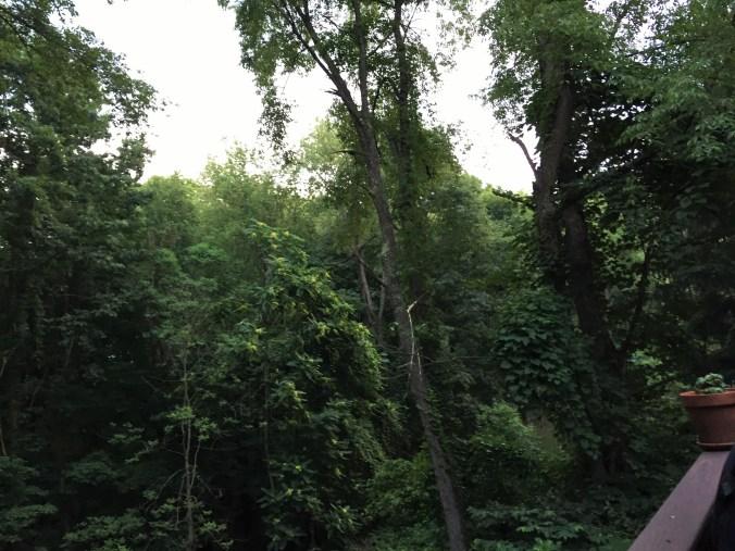 Jungle Casa Stewarti