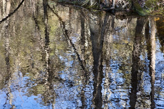 """Reflections #1"" archival pigment print by Gail Samuelson (courtesy of the artist and 555 Gallery)"