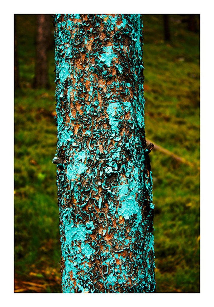 """Tree Lines, Cyan 2, 2013"" by Mary Ellen Strom (courtesy of the artist and 555 Gallery, Boston)."