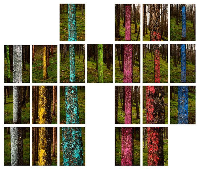 """Tree Lines, 2013"" by Mary Ellen Strom (courtesy of the artist and 555 Gallery, Boston)."