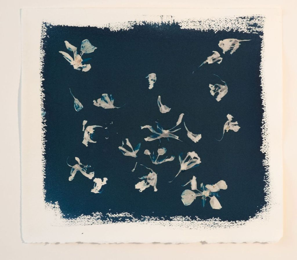 """""""Celestial Mooring #42"""" cyanotype on paper by Cynthia Katz (courtesy of the artist and 555 Gallery, Boston)."""