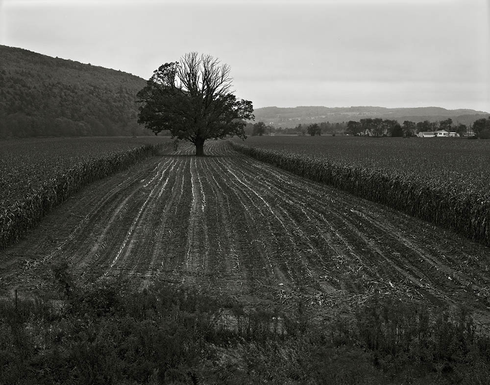 """""""Steuben County, New York, 1986"""" from the series Trees by Frank Armstrong (courtesy of the artist and Gallery Kayafas, Boston)."""