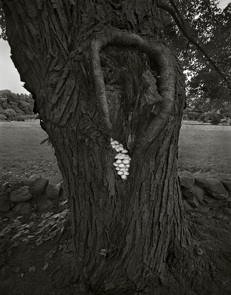 """""""Westborough, Massashusetts, 2000"""" from the series Trees by Frank Armstrong (courtesy of the artist and Gallery Kayafas, Boston)."""