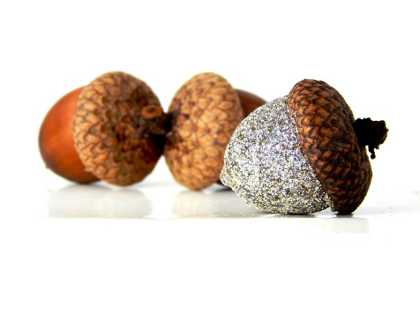 Three acorns