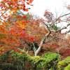 昭和記念公園で紅葉デートを成功させる最強スポットと混雑回避法
