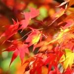 養老渓谷の紅葉の見頃と滝に車でいく場合の混雑・駐車場情報