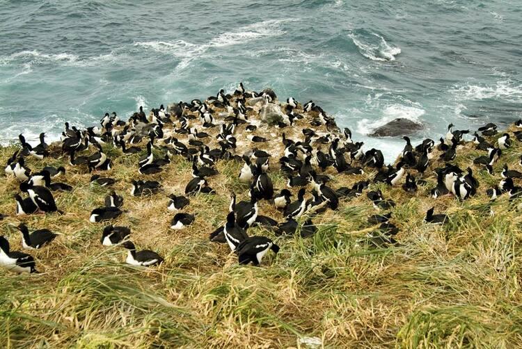 Bildergebnis für new zealand subantarctic islands