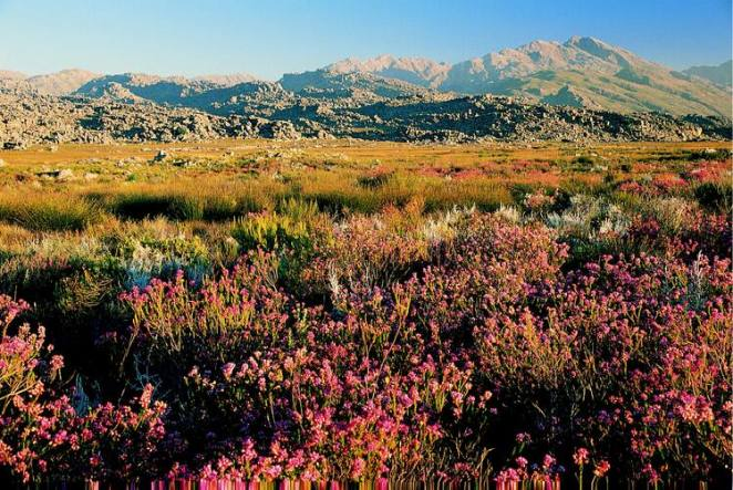 Cape Floral Region Protected Areas - UNESCO World Heritage Centre