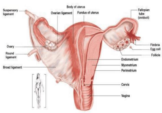 Oophorectomy