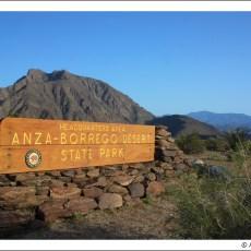 The Great Sonoran Desert