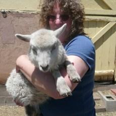 Beyond Farmer's Markets (Sheep Thrills Farm, AZ)