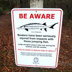 Beware Of…..The Fish?
