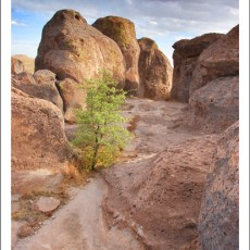 A Phoenix In the Desert – City of Rocks, NM