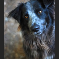 Capturing The Perfect Shot -> Pet Portraits