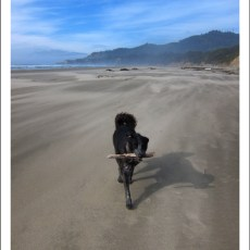 SP Campground Review – Beverly Beach State Park, Newport, OR