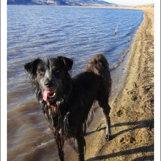 SP Campground Review – Washoe Lake State Park, Carson City, NV
