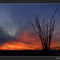 Just a Few More Desert Shots…
