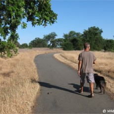 NFS Campground Review – Sycamore Grove, Red Bluff, CA