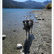 NFS Campground Review – Oh Ridge, June Lake, CA