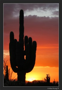 And a cactus sunset